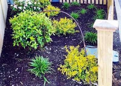 Everett Backyard Plantings